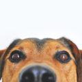 Getreidefreies Hundefutter