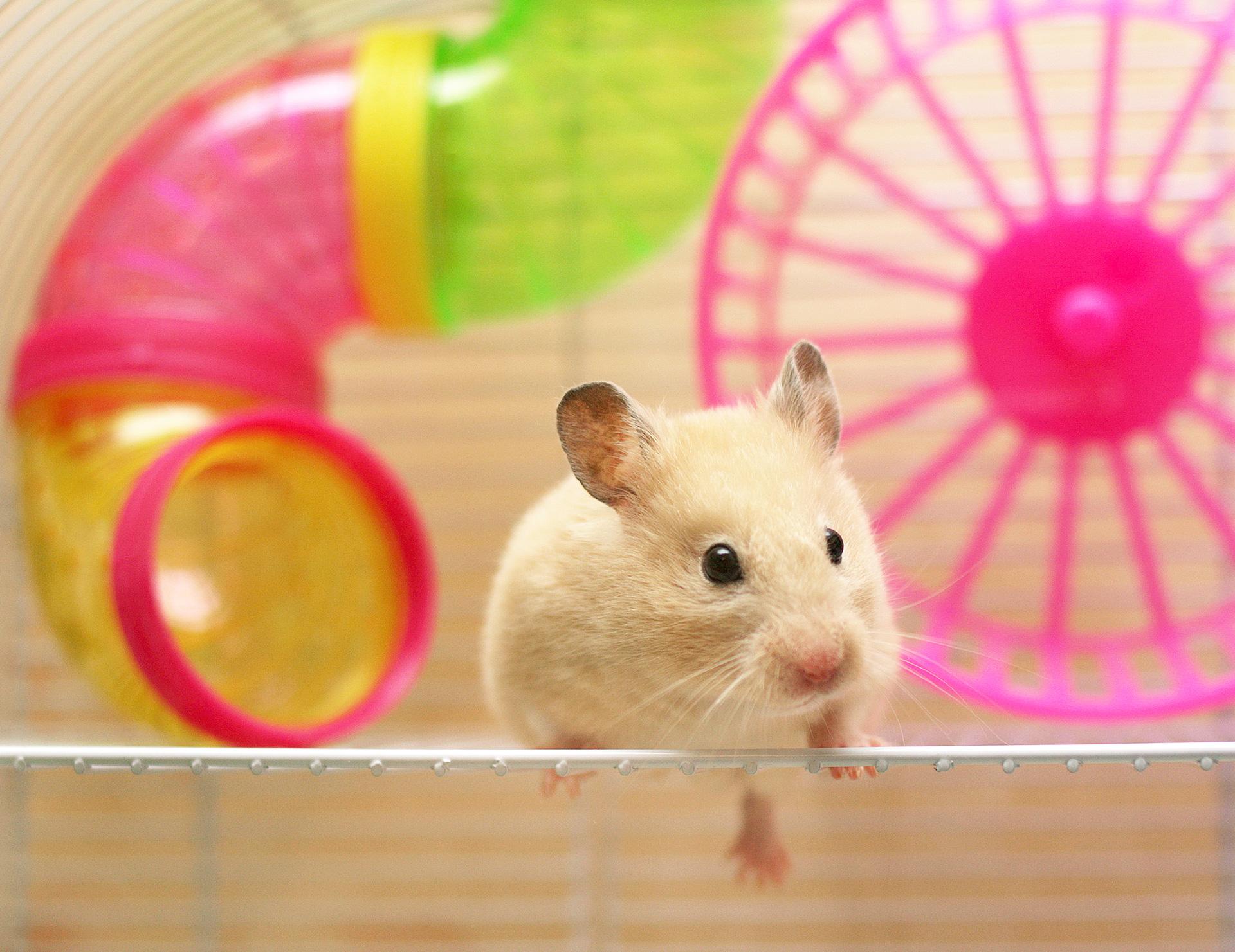 Hamsterkäfig Ratgeber 2021