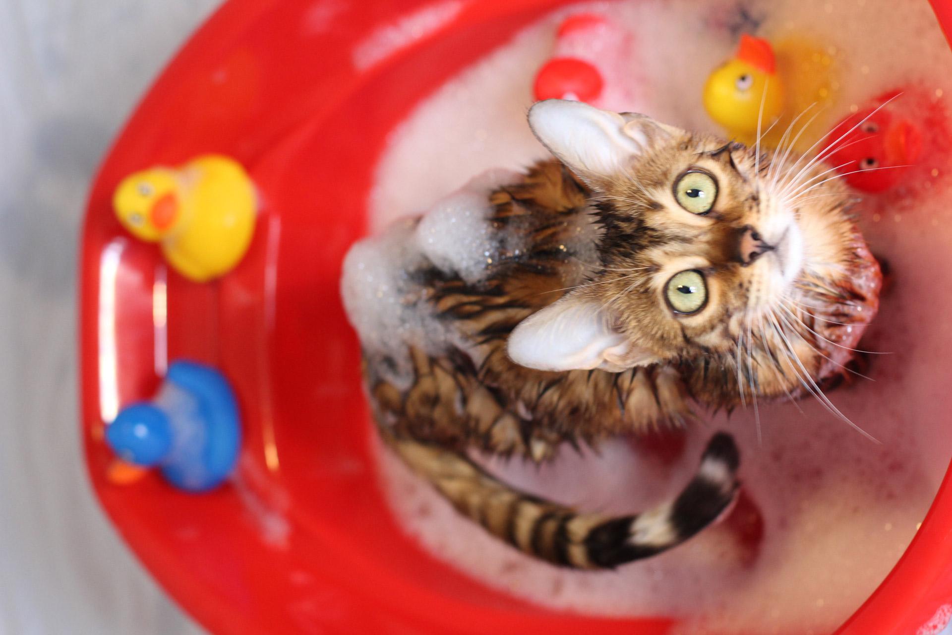 Das richtige Katzenshampoo kaufen