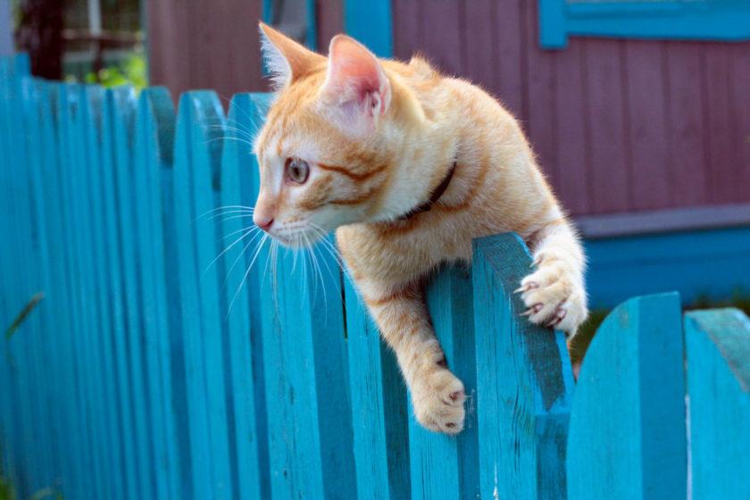 Katzenschreck hält Katzen fern