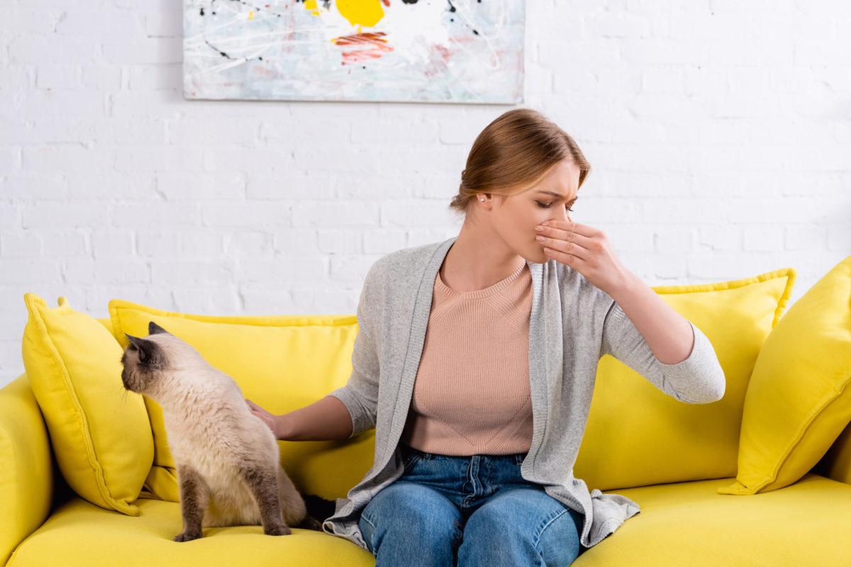 Um Katzenurin-Geruch zu entfernen, muss nicht gleich ein neues Sofa gekauft werden. Gute Reiniger leisten Abhilfe!